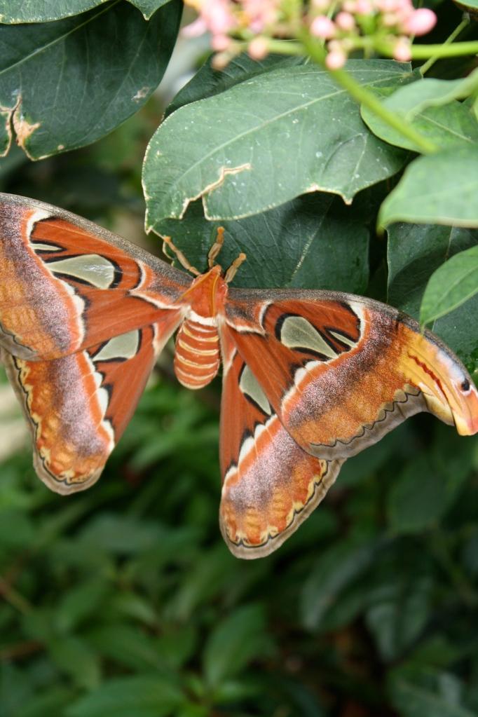 Moth at the Zoo