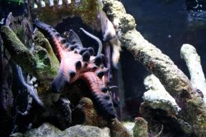 Burnt starfish at zoo